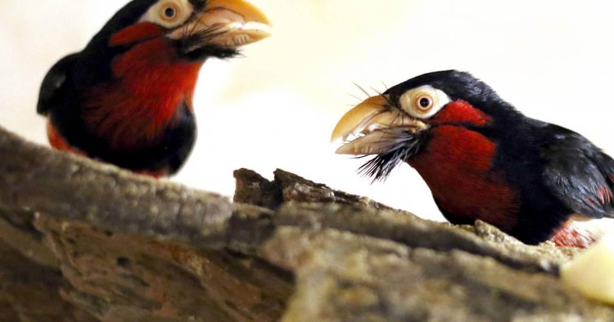 Eden Bird Park, Rákóczifalva